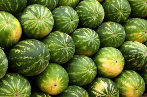 green-watermelon-background-11278587494n8o1